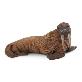 Collect A - Walrus